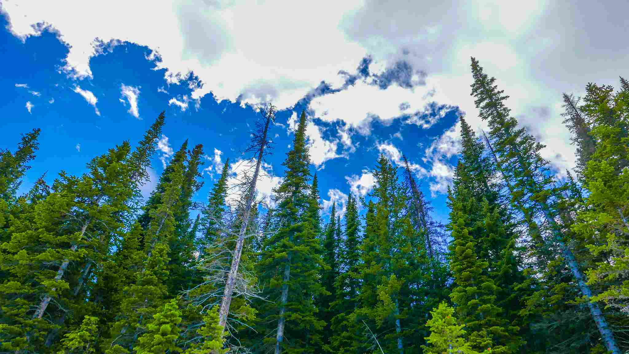 Washington State Forests