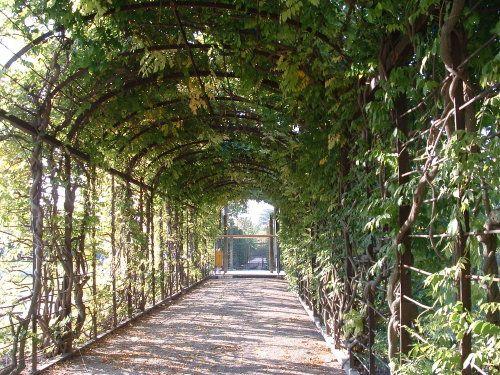 Pasarela del jardín en el Palacio de Schonbrunn en Viena, Austria