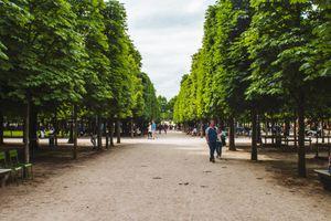 Tree lined walking paths in Jardin des Tuileries