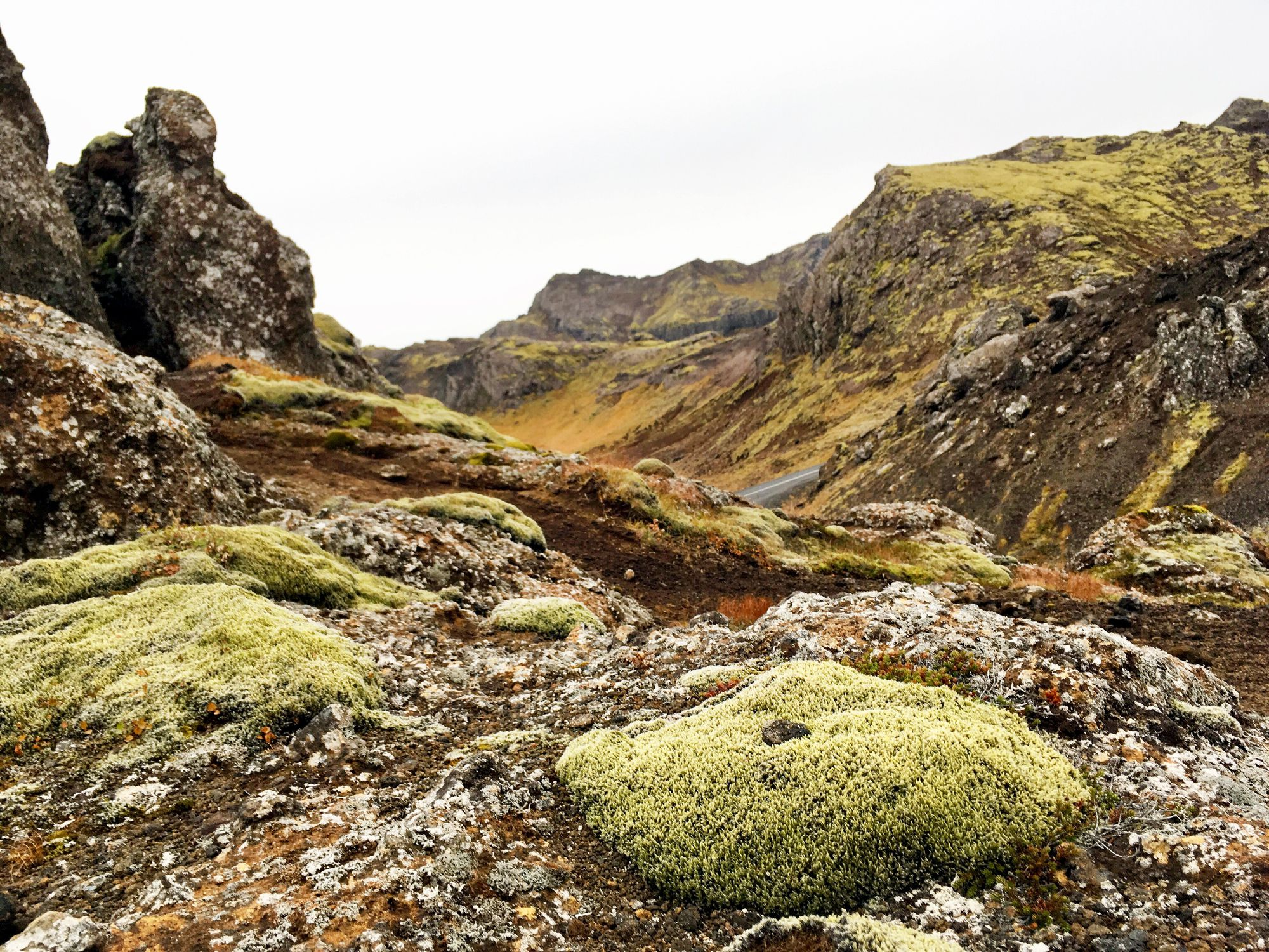 Rocas de montaña cubiertas de musgo, Hengilssvæðið, Islandia