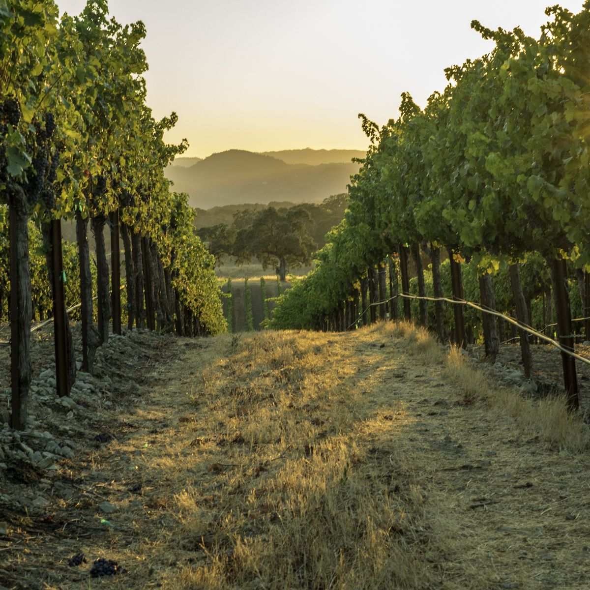 The Best Time to Visit California's Wine Country