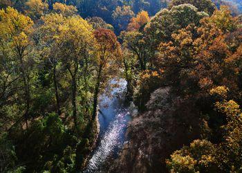 Rock Creek Foliage