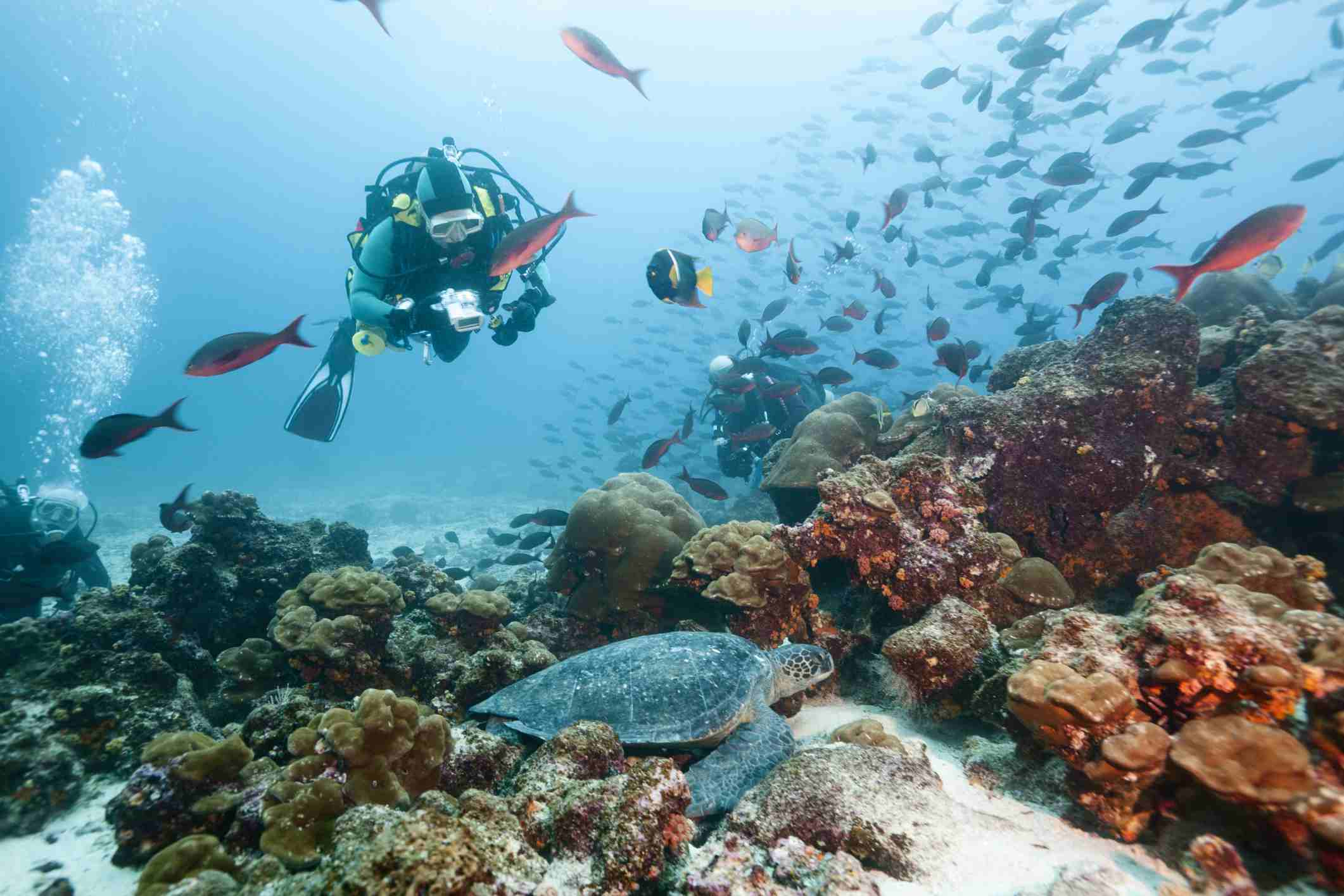 Scuba diving off the Galapagos Islands