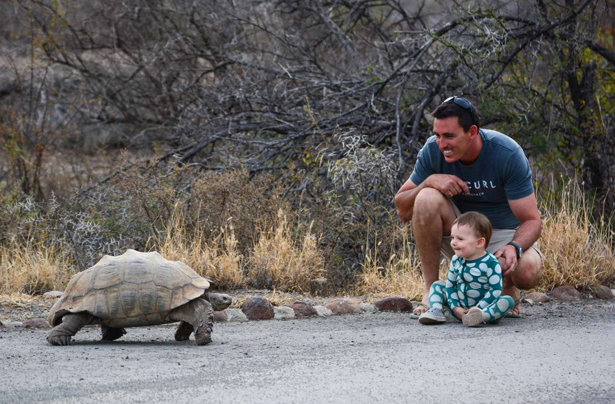 Father and daughter meeting a giant tortoise
