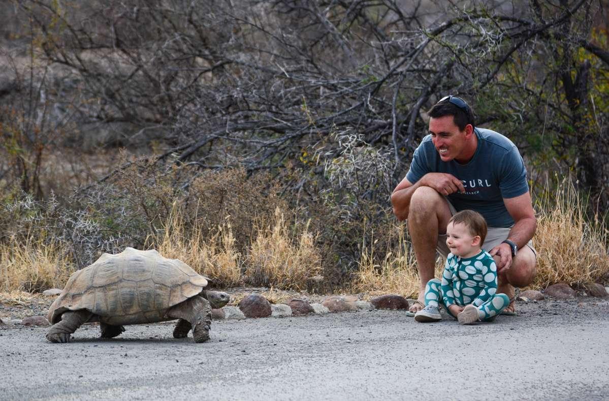 Padre e hija se encuentran con una tortuga gigante