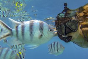 Woman Swimming with fish Underwater in El Nido