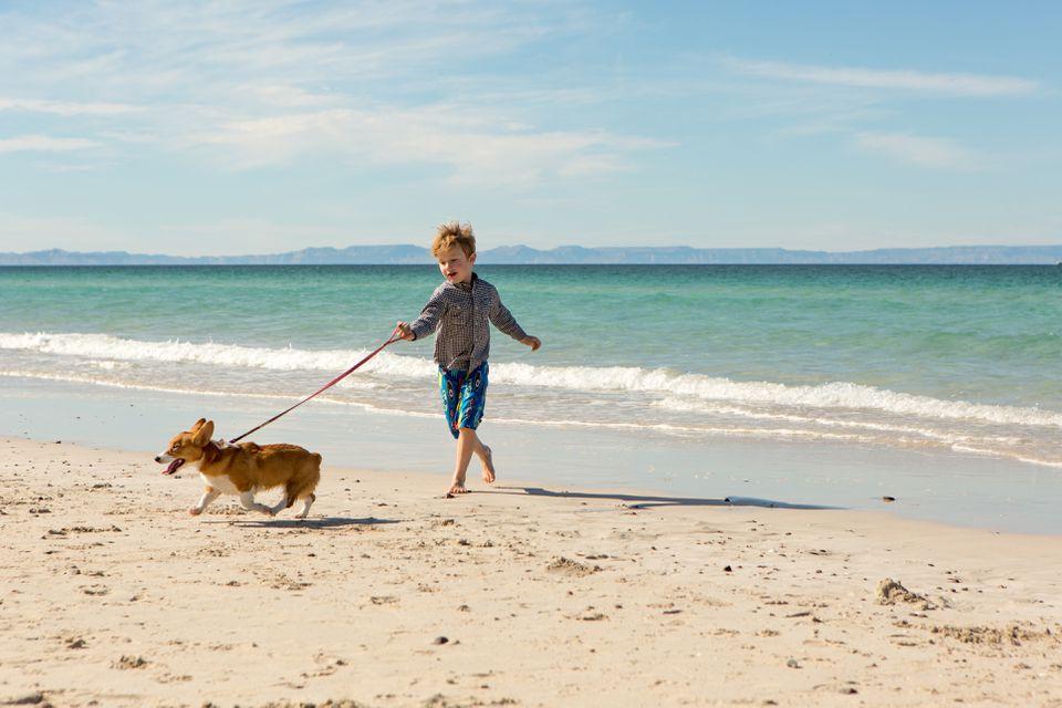 Young boy walking dog on beach