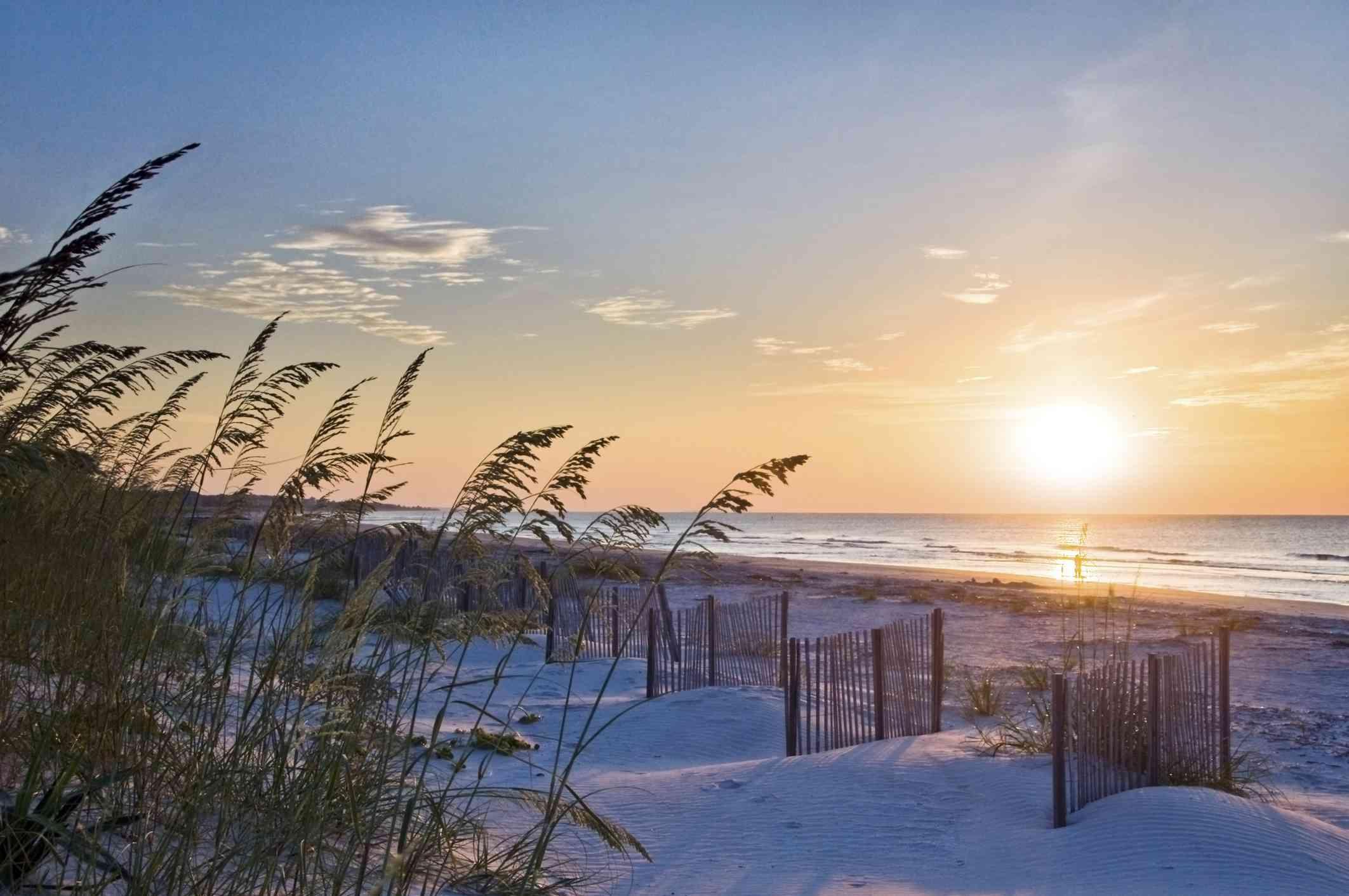 Sea oats and small beach fences are illuminated at sunrise on a beach on Hilton Head Island, SC
