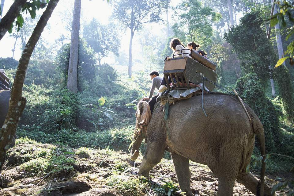 Backpackers sitting on an elephant in Chiang Mai, Thailand