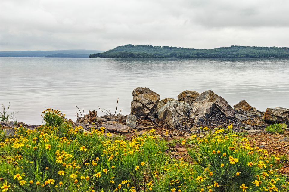 Lake Dardanaelle Flowers at shoreline Rocks and Views