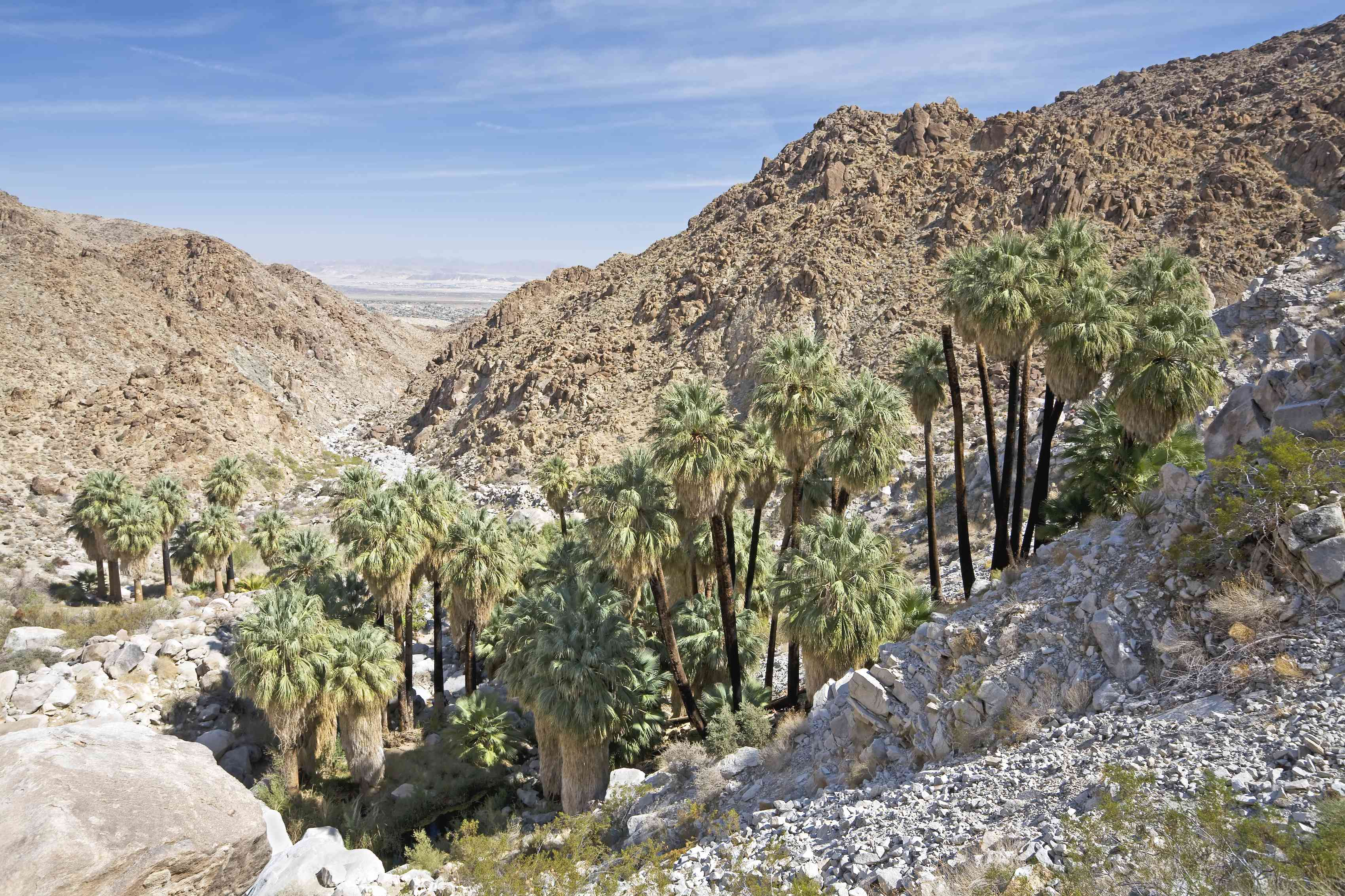 Fortynine Palms Oasis in JTNP