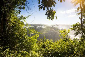 The jungles of Brazil during the January rainy season.
