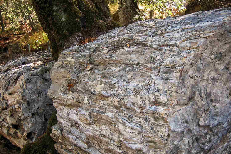 Petrified Redwood Tree