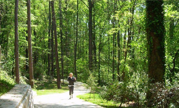 Nancy Creek Trail