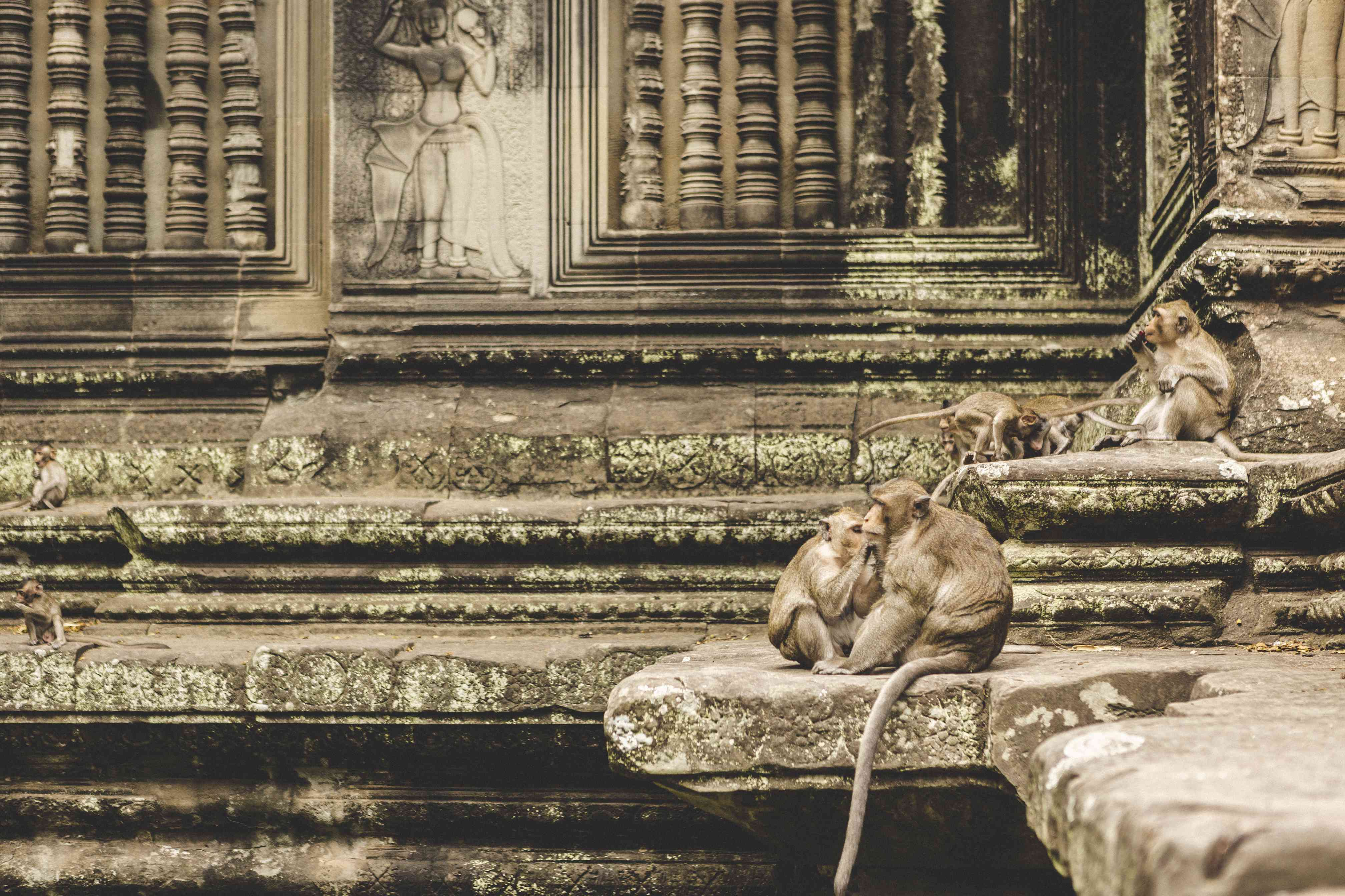 Monkeys at Angkor Wat