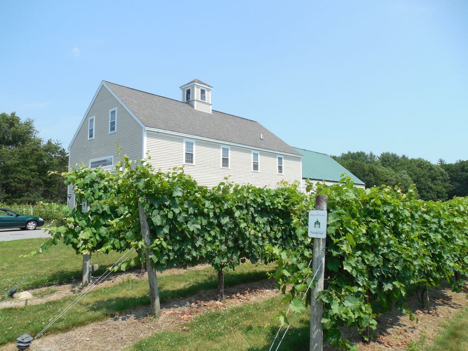 Jewell Towne Vineyards, Amesbury Massachusetts