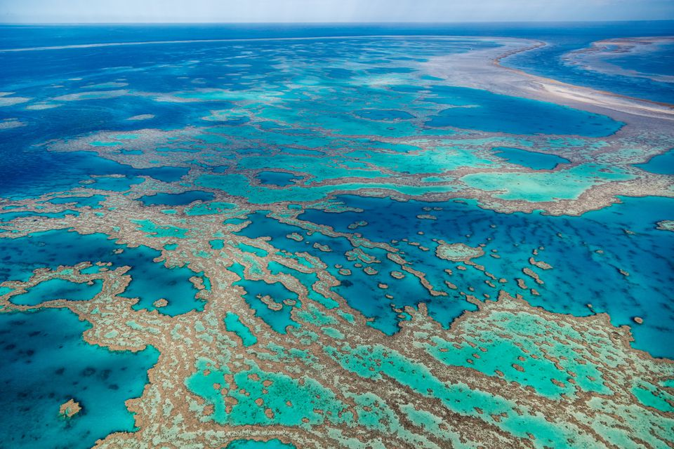 Aerial view of coral and turquoise waters at Hook and Hardy Reef. Great Barrier Reef Marine Park, Whitsundays, Queensland, Australia