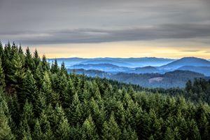 The forest outside of Eugene