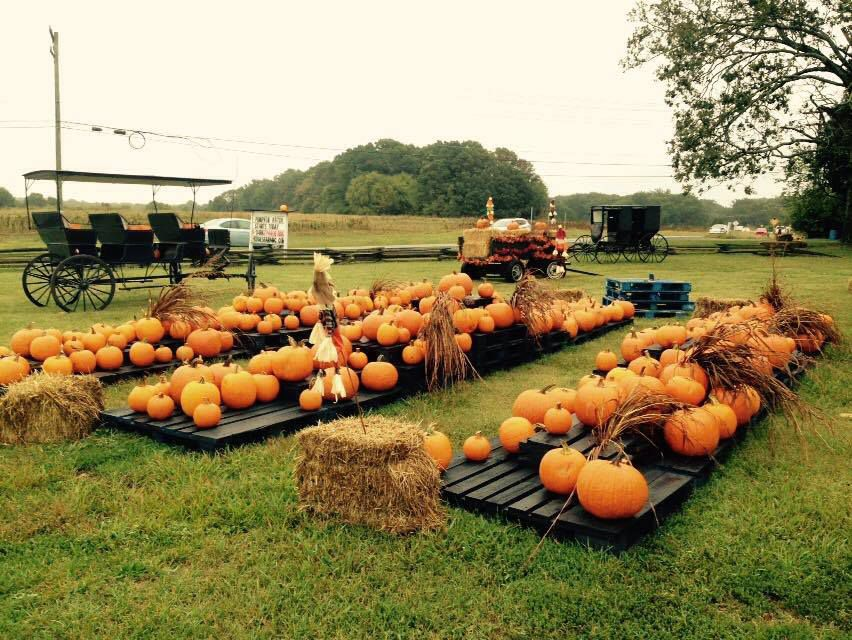 Hodges Family Farm And Pumpkin Patch