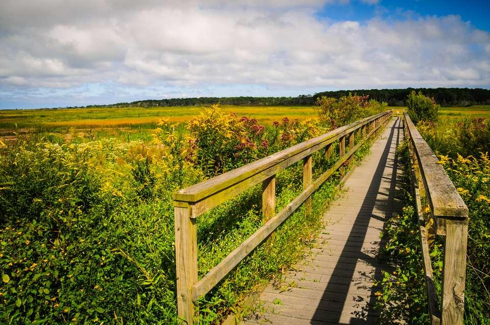 Boardwalk Across the Marsh in the Autumn