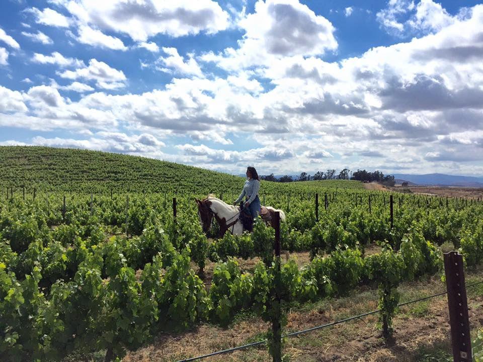 Woman riding a horse through a vineyard