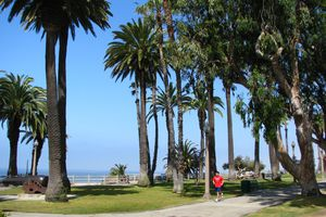 Person jogging through palm trees in Palisades Park