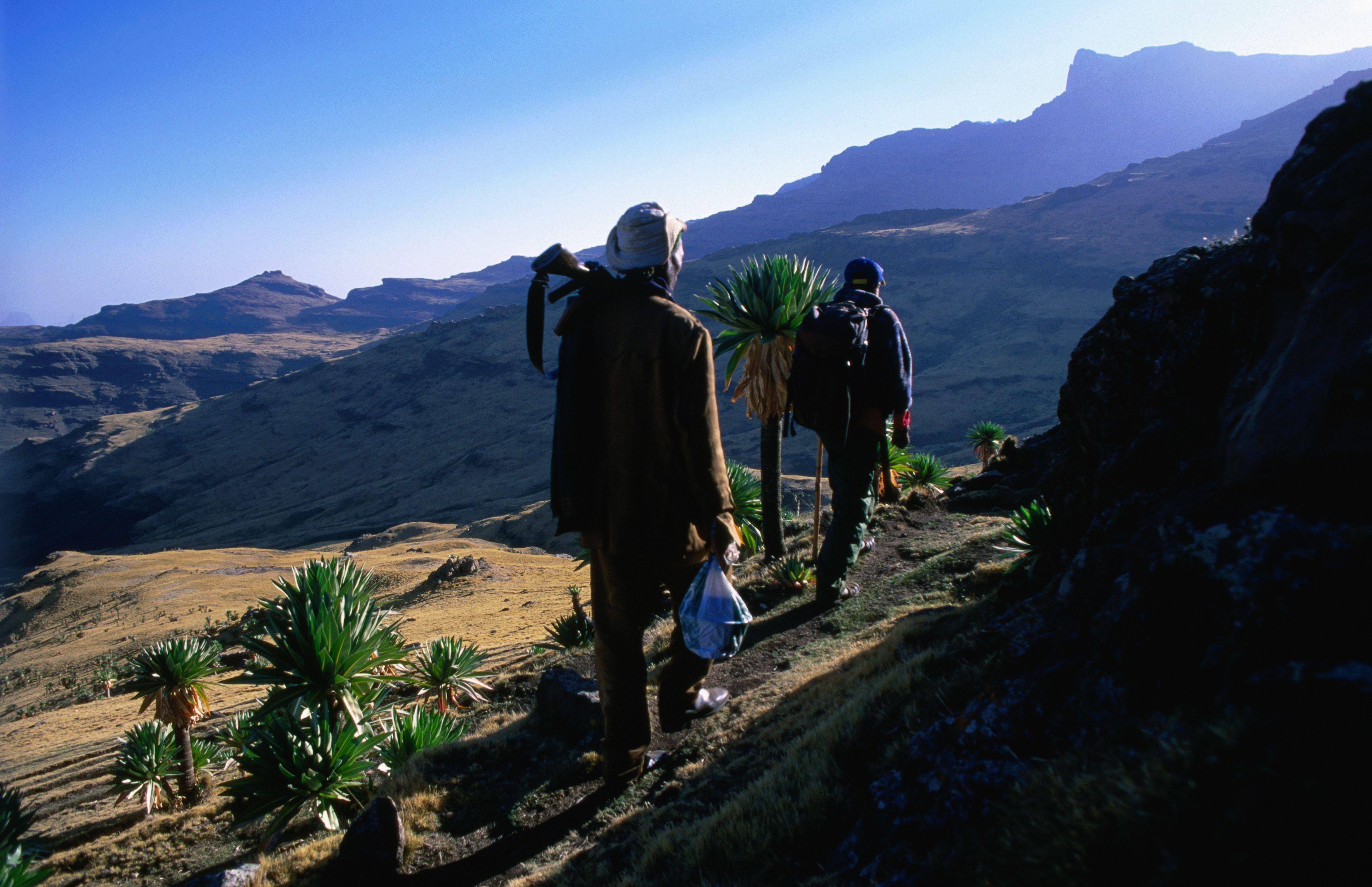 Trekkers climb to summit of Ras Dashen.