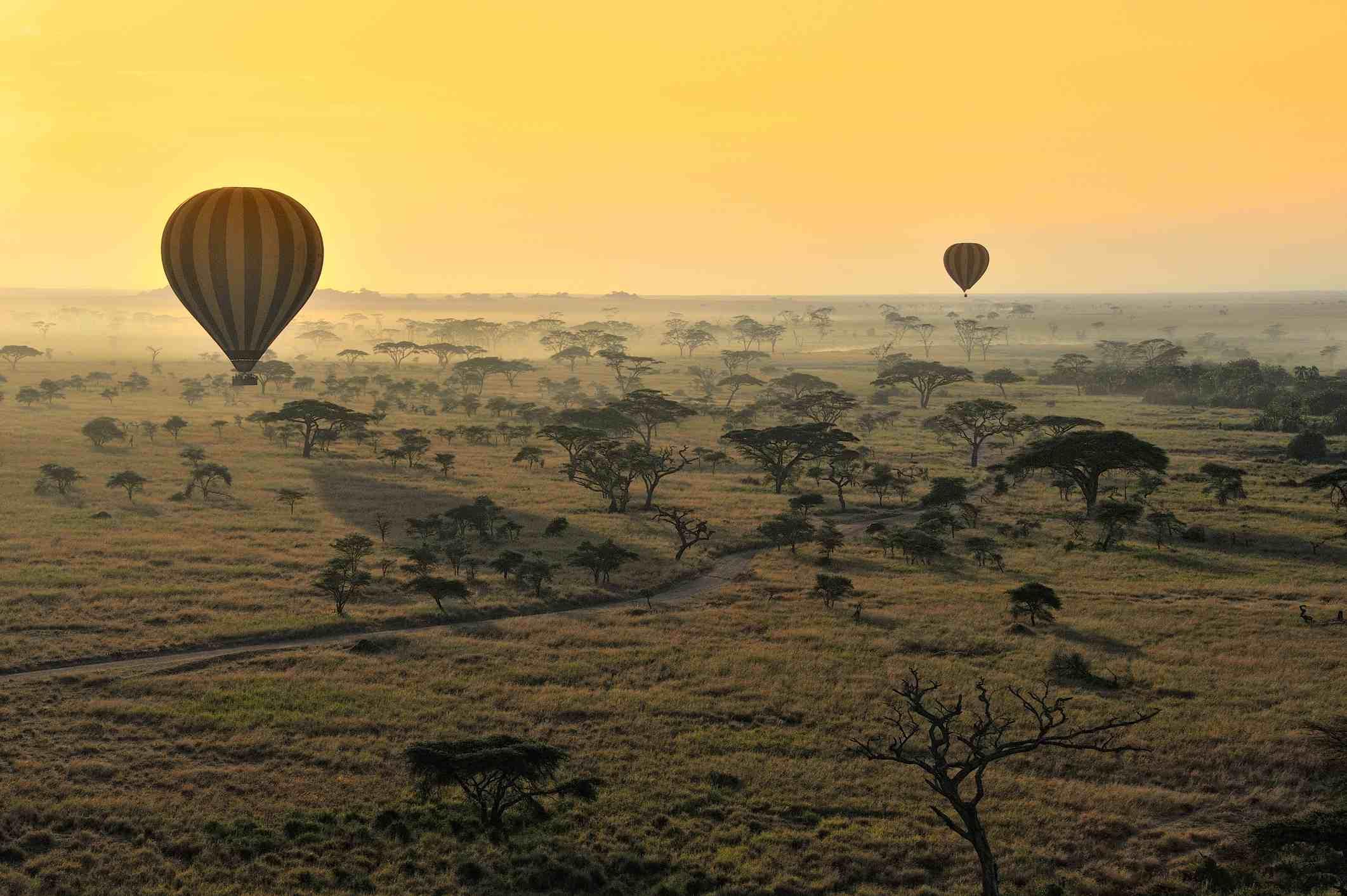 Hot air balloons over Serengeti National Park, Tanzania