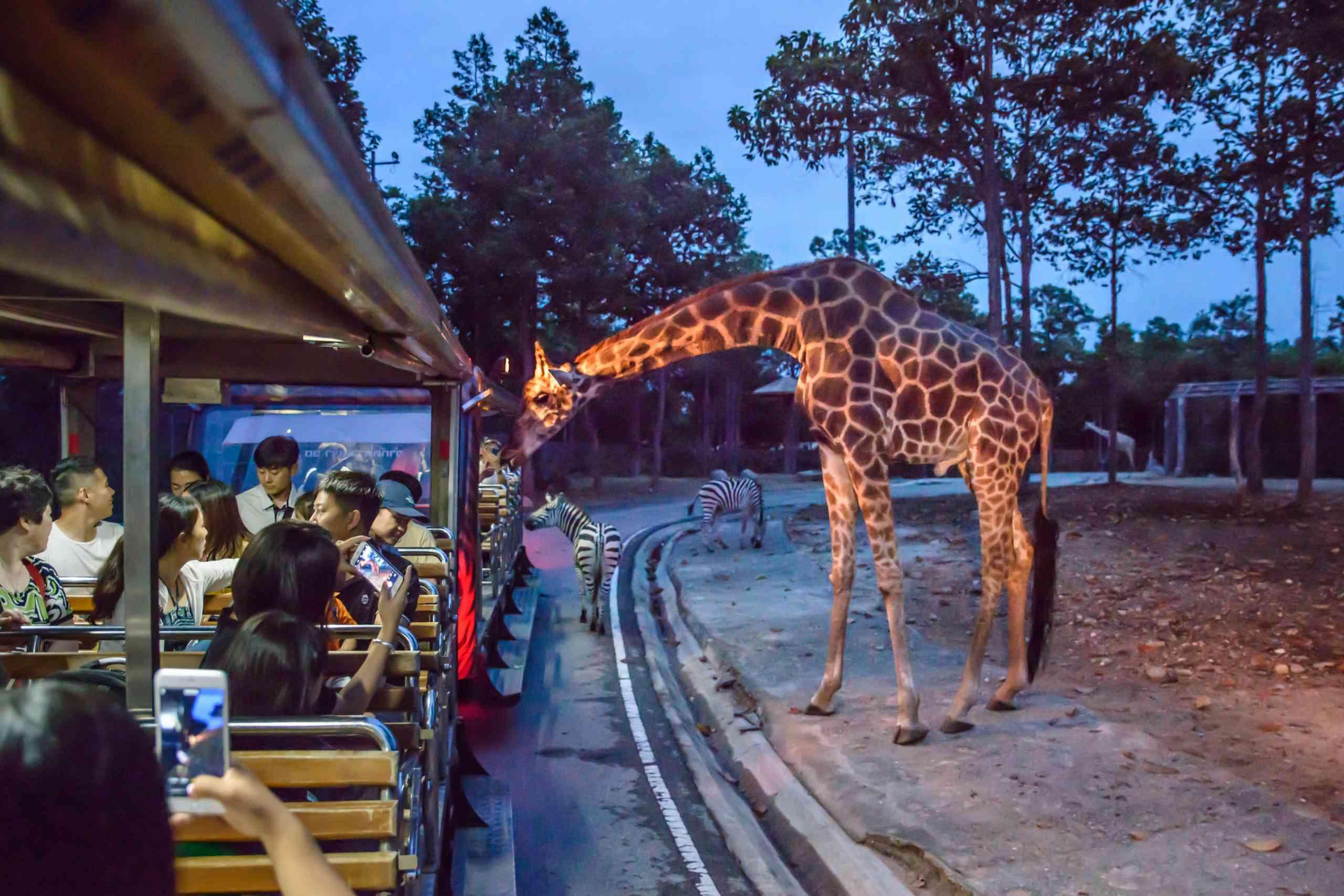 Giraffe in Chiang Mai Night Safari