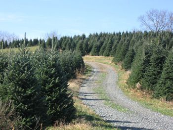 where to cut your own christmas tree near charlotte