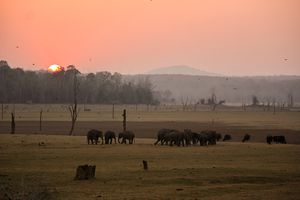 Elephants at Nagarhole.