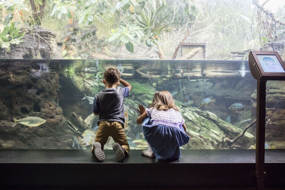 Two kids looking at a fish tank in the Shedd Aquarium