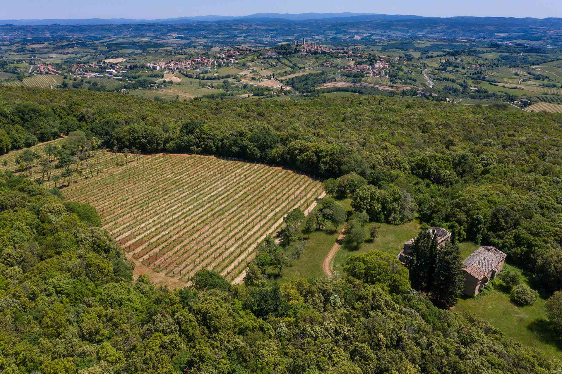 Aerial view of Montenidoli vines with San Gimignano in the distance
