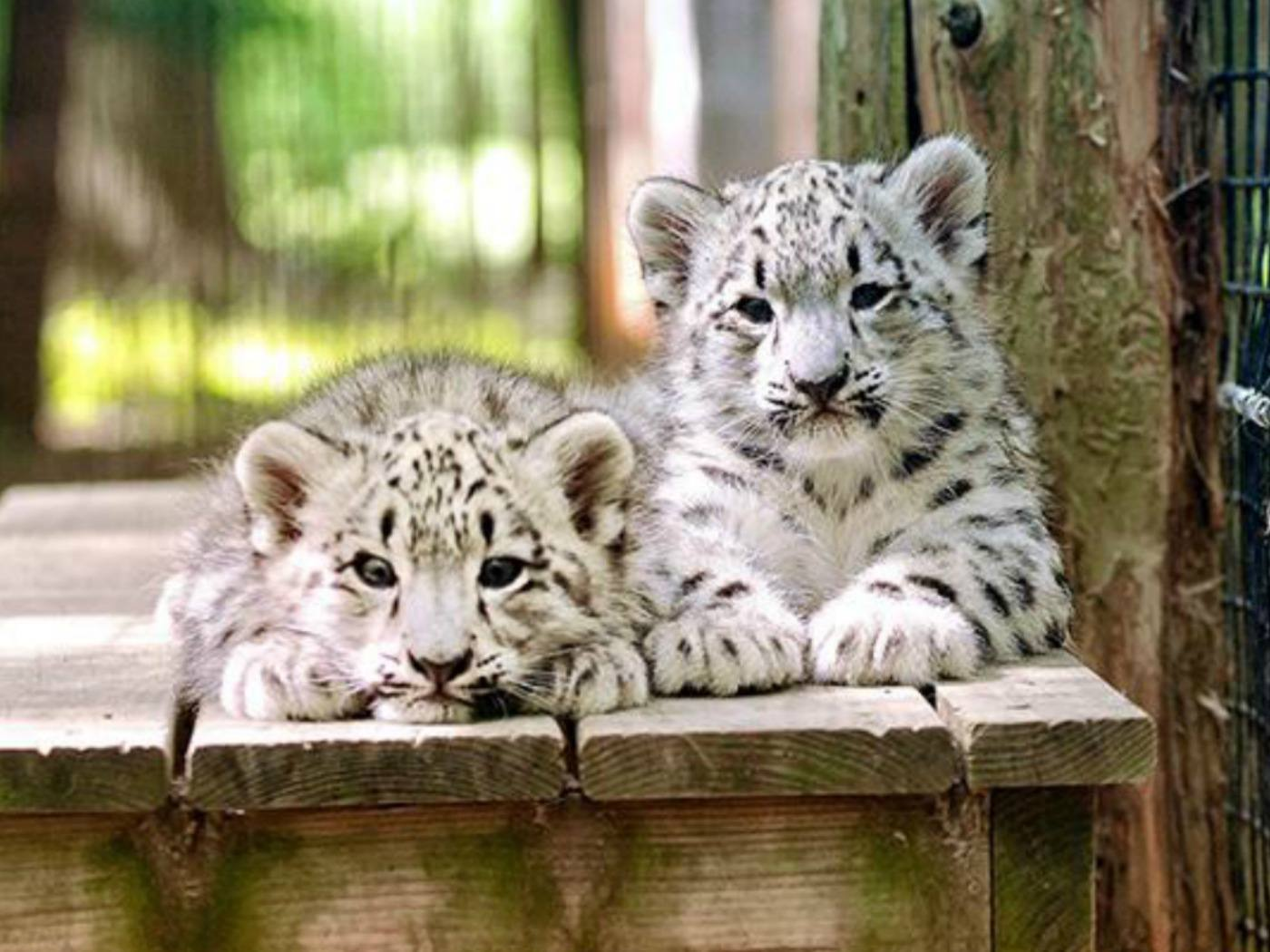 Best Zoo Locations in the United States
