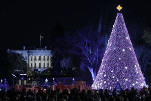 2016 National Christmas Tree