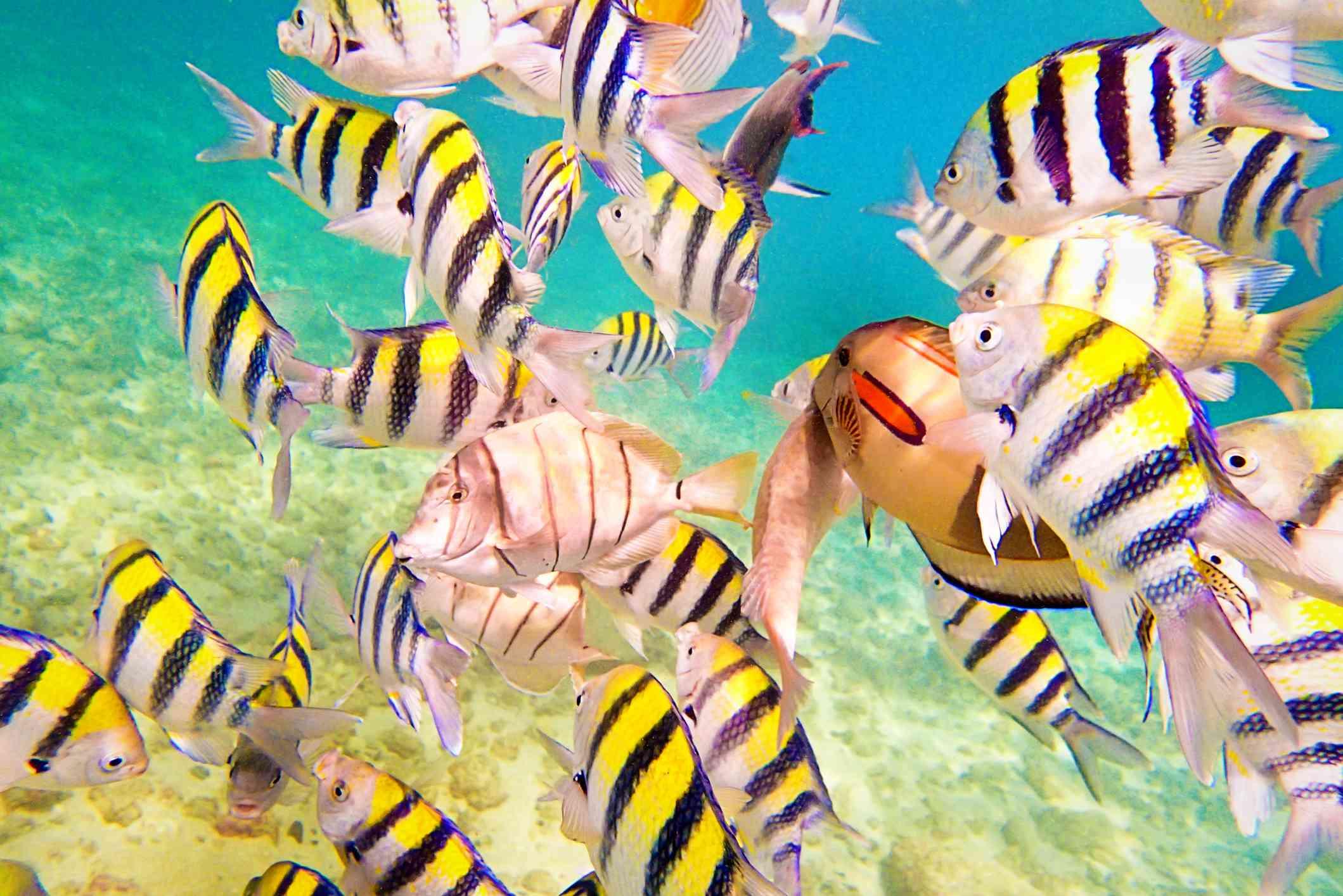 Fish in a popular Kauai snorkel spot