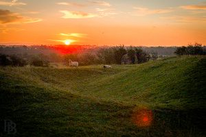 Winter sunrise at the Hill of Tara, just me and the sheep (droppings)