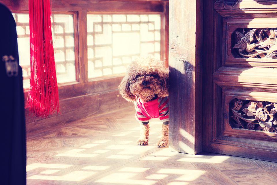 Retrato de perro parado junto a la pared de madera en casa