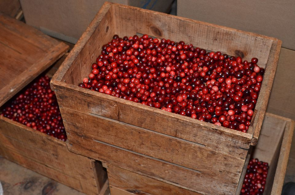Fresh New England Cranberries
