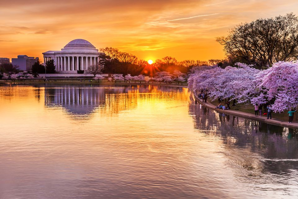 Cherry blossoms at sunrise in Washington, DC