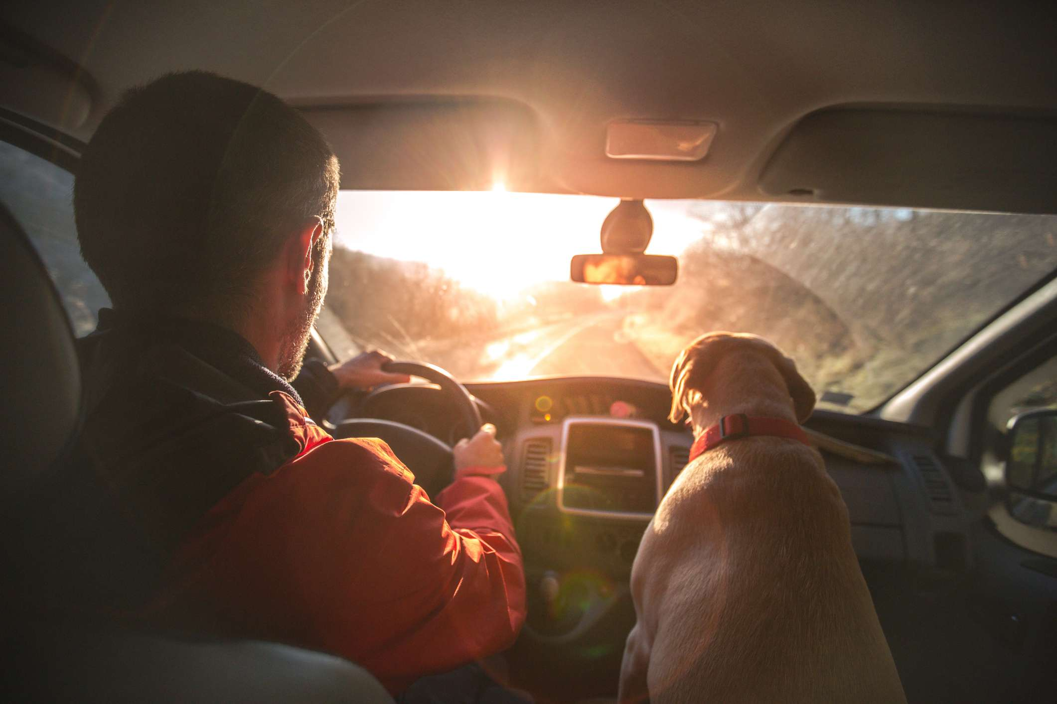 photo of car interior with a man driving the car and a dog in the passenger seat