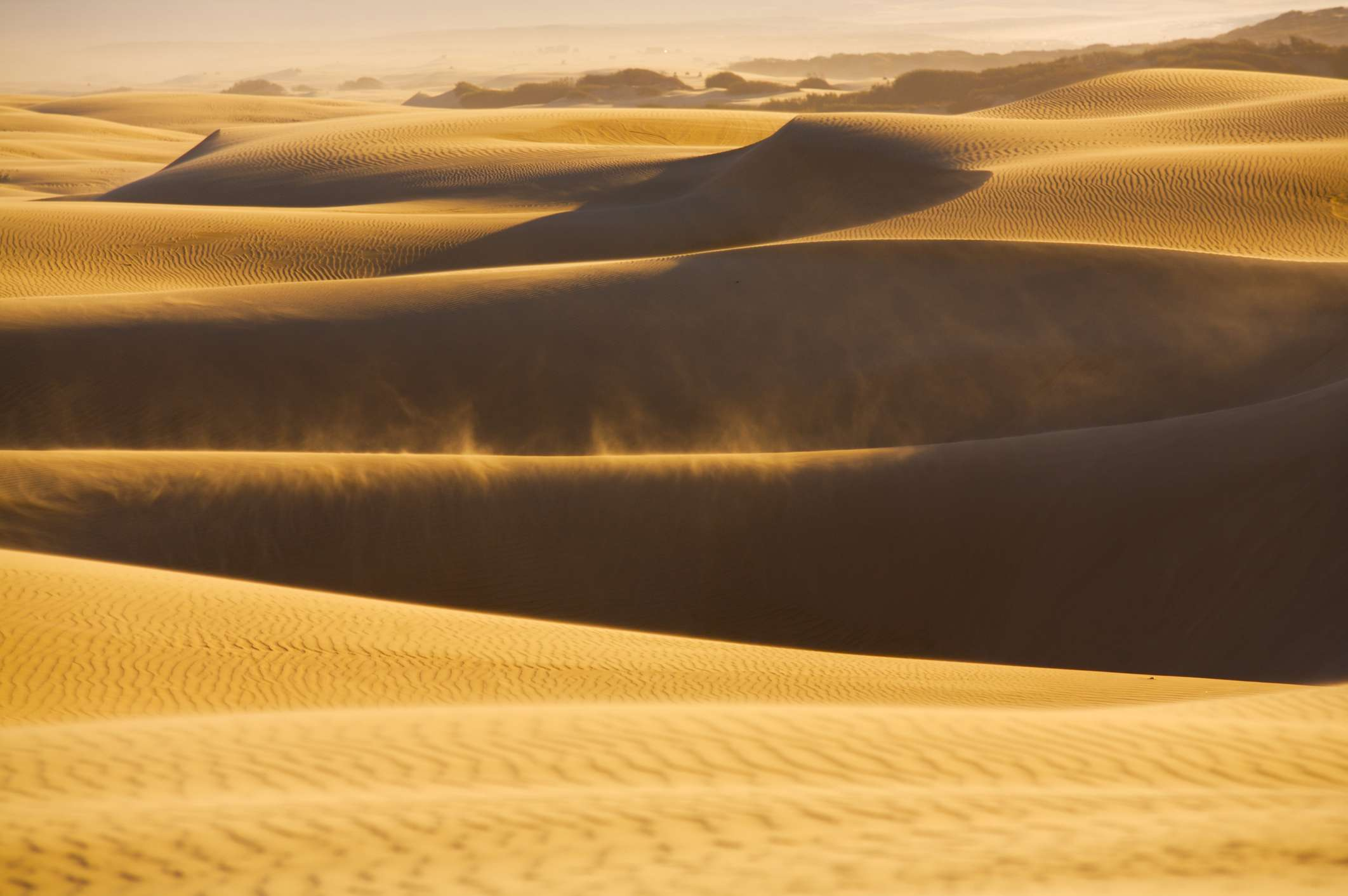 The sand dunes of SLO County