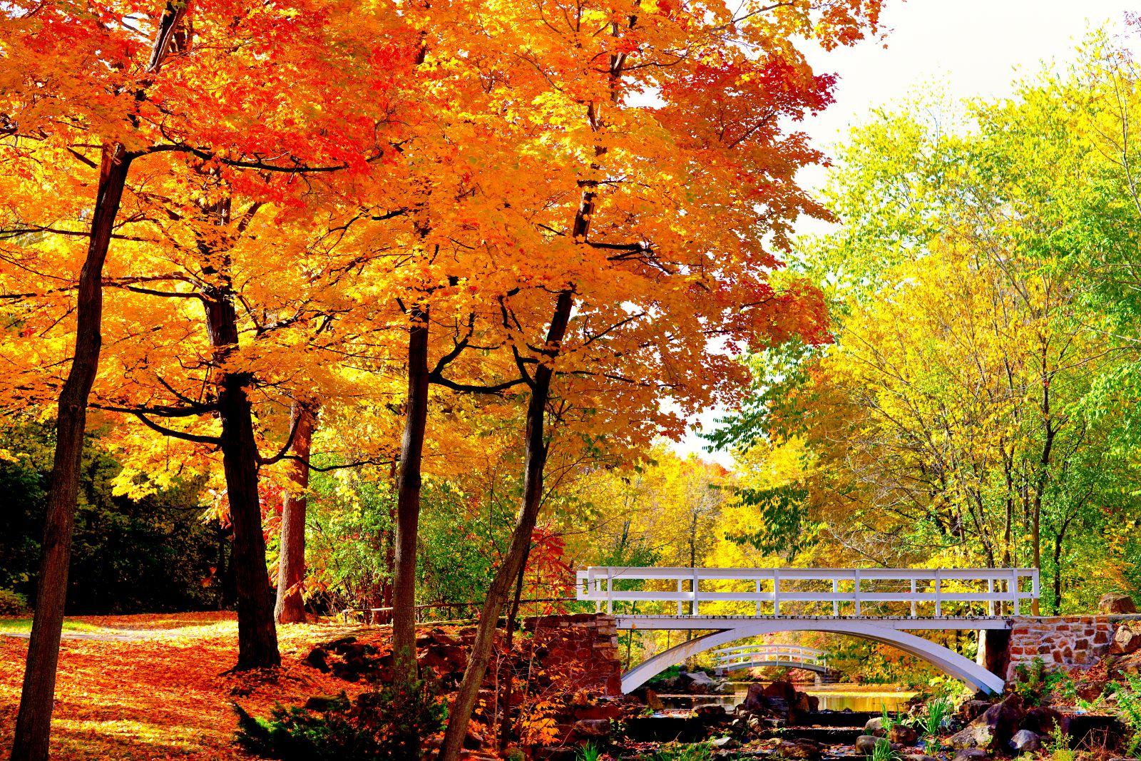 Montreal Fall Foliage: Top Leaf-Peeping Destinations