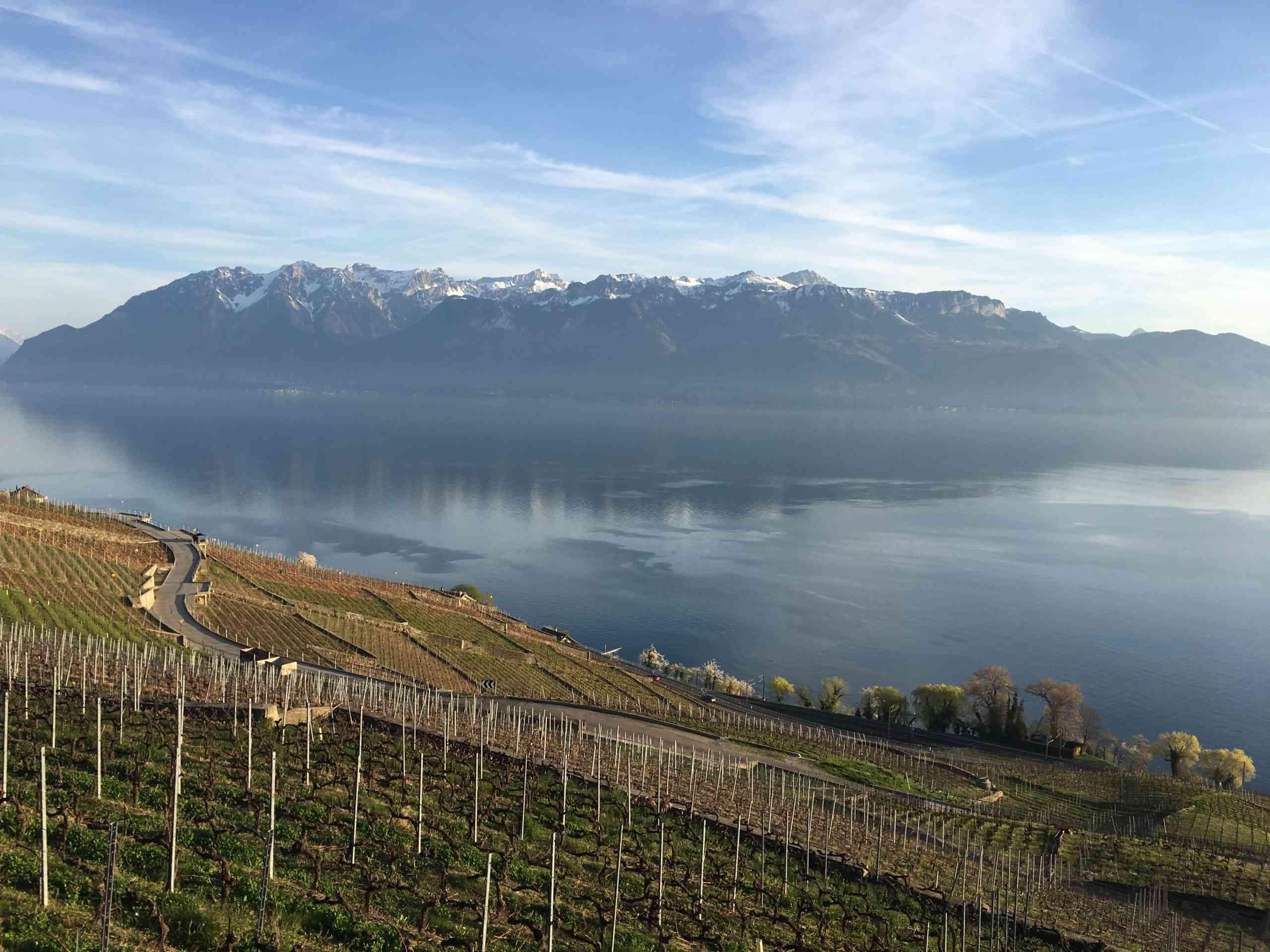 Terraced vineyards of Domaine Blaise Duboux