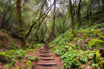 Hiking trail in Sugarloaf Ridge State Park,