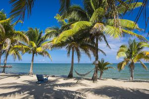 Hammock slung between two palm trees in Belize.