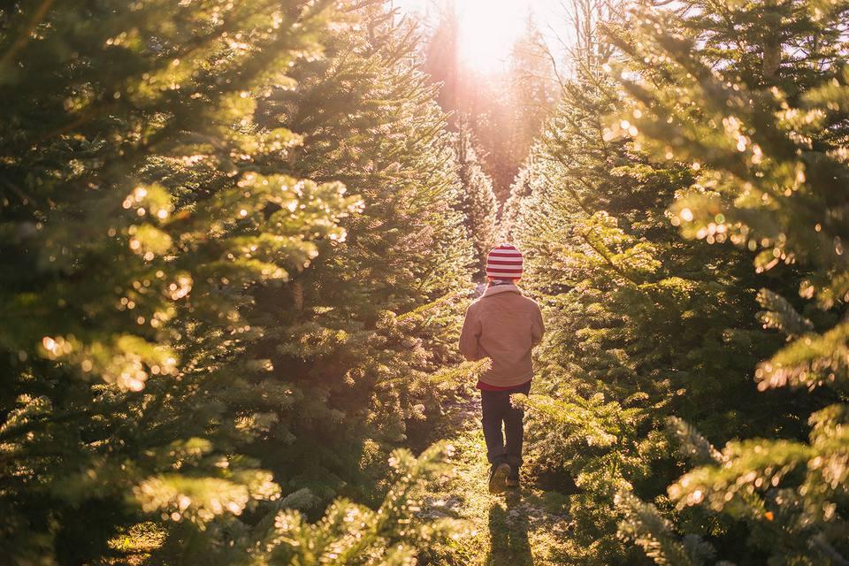 Brightwaters Farms - Long Island Christmas Tree Farms