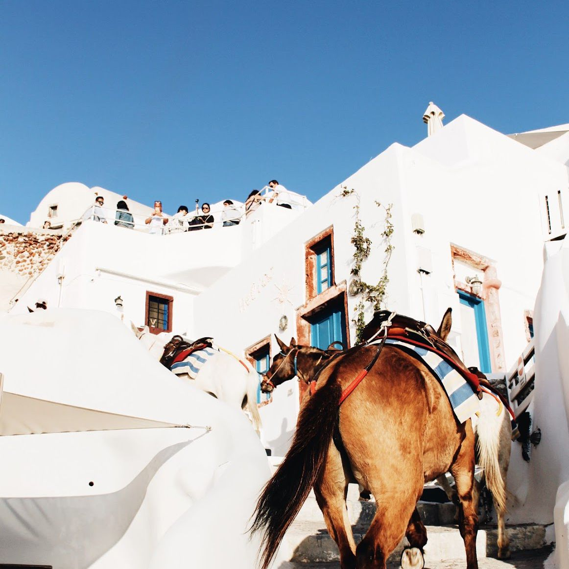 Donkeys climbing up the stairs in Santorini