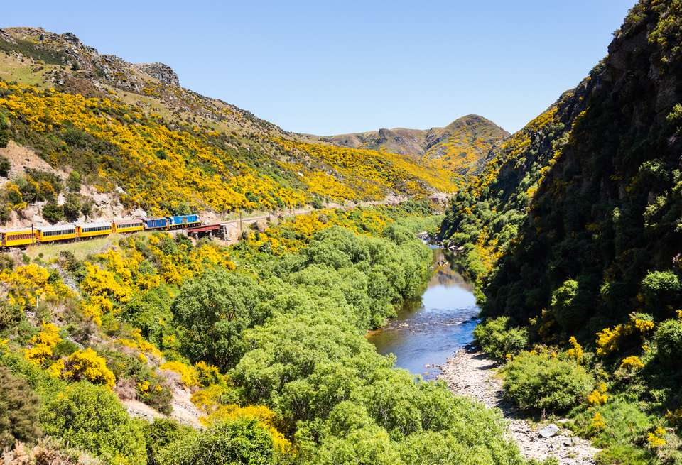 train traveling through a river gorge with yellow flowers on the hills