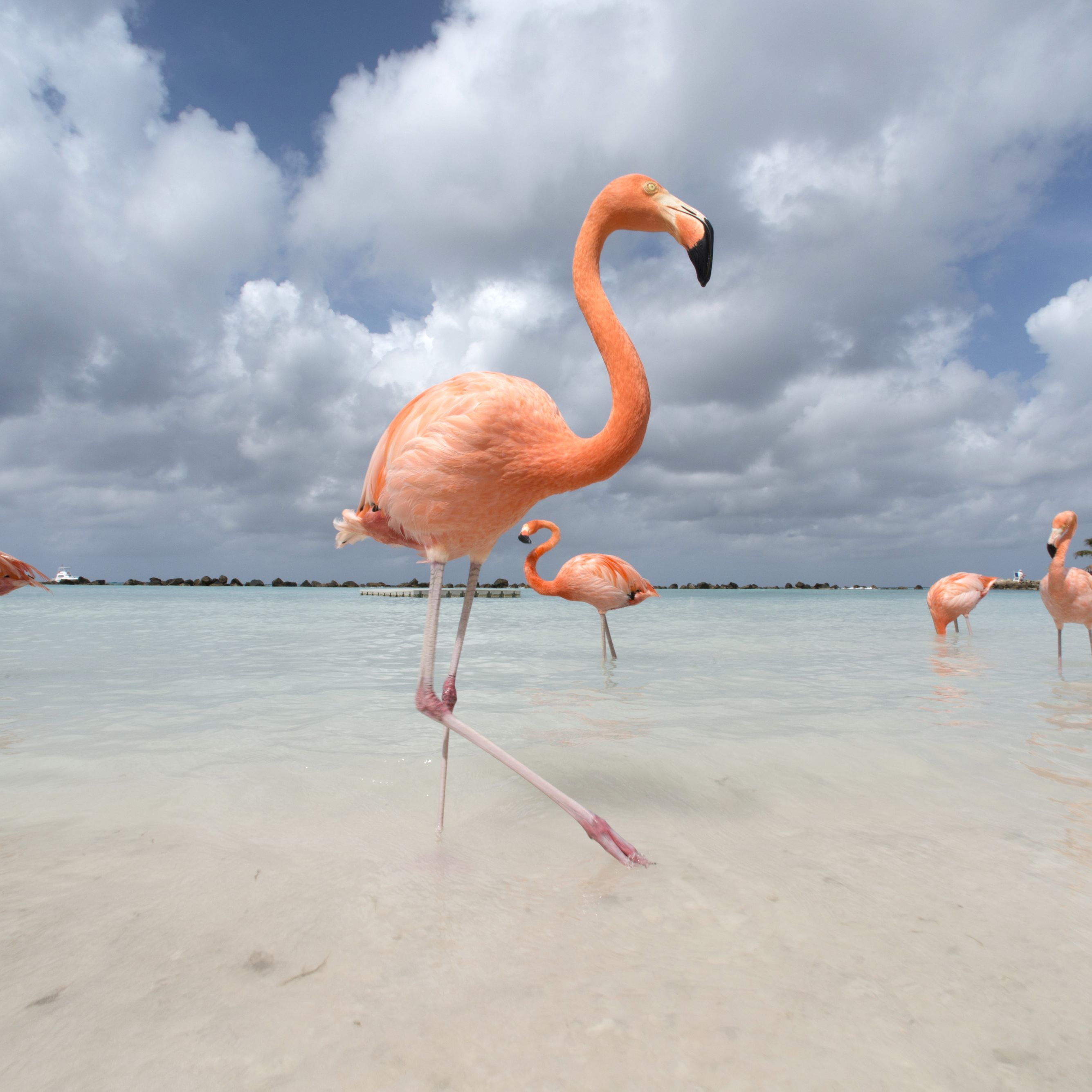 The Best Time to Visit Aruba